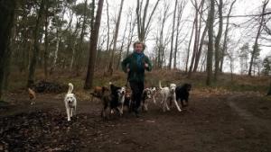 Dagopvang voor uw hond in de vorm van leuke, avontuurlijke daguitstappen