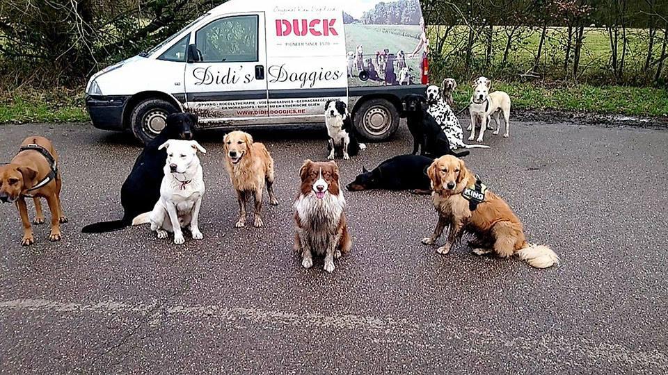 Verdeelpunt Duck hondenvoer